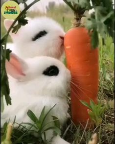 Baby Animal Videos, Funny Animal Videos, Cute Little Animals, Cute Funny Animals, Cute Baby Bunnies, Cute Babies, Bunny, Fluffy Animals, Animals And Pets
