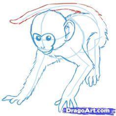 how to draw monkeys step 11