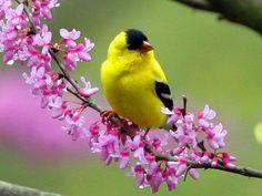 꽃과 새.