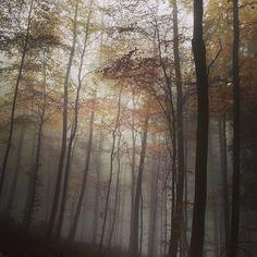 """@ythamm's photo: """"雲の中みたい #森#霧#紅葉#ハイデルベルク #ドイツ#odenwald #heidelberg #nebel#herbst #schön#natur"""""""