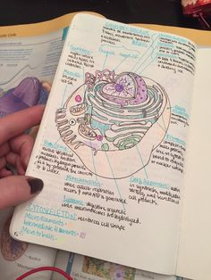 Study Hard, studilily: There is no end to my biology notes…...