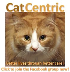 CatCentric.org - September is 'Happy Cat Month.' Here are five great ways to ensure your cat is a happy cat!