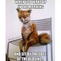 Top 10 Funniest Stoned Fox Memes