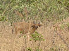 Kamerun Travel, Animals, Africa, Animales, Trips, Animaux, Viajes, Traveling, Animal