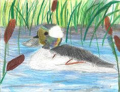 The 2013 Florida Junior Duck Stamp of Tracy Feuer, 8, honorable mention in Group 1, grades K-3. DDWS photo