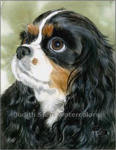 CAVALIER KING CHARLES Spaniel Tri Colored 15x11 Art by k9stein, $40.00