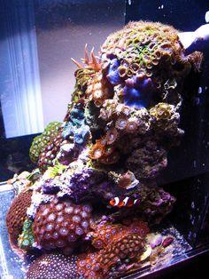 Very Pretty Nano Reef Setup