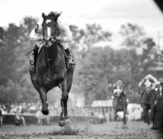 """""""She laughs in the face of fear, and cannot stand still when the trumpet sounds...""""  <3 Rachel Alexandra"""