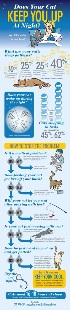 Cat Sleep Patterns (Infographic) #cats #cat behavior
