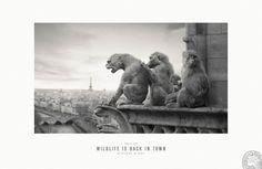Paris Zoo: Wildlife is back in town | #ads #adv #zoo #animals #werbung #marketing #creative #publicité #print #poster #advertising #campaign found on http://printwerbung-hamburg.de/tierisch-gut-zoo-werbung/ pinned by www.BlickeDeeler.de | Visit our inspirational website www.Printwerbung-Hamburg.de
