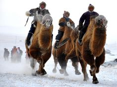 Camel race on Bactrian camels. Mongolian tribesmen take part in a camel race during a winter Naadam festival in Hulun Buir, north China's Inner Mongolia region on December 2, 2011, in the latest event to promote tourism in the cold winter months. China's latest five-year economic plan calls for tourism revenues to rise 10 percent annually to 2.3 trillion yuan by 2015, up from 1.44 trillion yuan in 2010. source?
