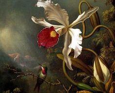 BRAZILIAN HUMMINGBIRD ORCHID FLOWER FOREST PAINTING MARTIN JOHNSON HEADE REPRO