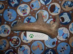 Jumbo Deer Antler Dog Chew Lot 626 by WildandWooleyTreats on Etsy, $29.99