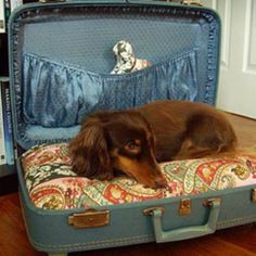 Dog bed in a vintage suitcase:  I could totally make this from Grandma's suitcases, but doesn't it seem like it might close on the dog?!??  That would be bad; not entirely sure why these seem to be SOOO popular