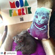 Bugünkü #bayrakritueli  İstanbul'dan @pinkylola 'dan geliyor. #SevimliHayvanYastıkları 'ndaki özel çalışmalarımızdan bir tanesi Pinky yani kedilerin efendisiKeyifli Pazarlar dileriz #Repost @pinkylola with @repostapp. ・・・ Modafabrikten pinky ve pinky 2aylıkken ;)  #modafabrik #pinky #scottishfold #cat #catstagram #catsmania #catlovers #kedi #catemoji #emoji #pillow #yastık #kedisevenler #kedisahipleri #greybluehair #instagood