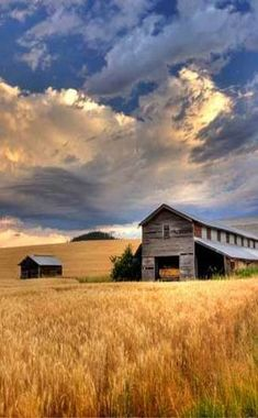 Beautiful photo ~~This jigsaw puzzle features an old barn nestled into the open space of a wheat field on a farm somewhere in Idaho.