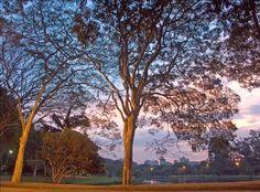 Ibirapuera Park in Sao Paulo, Brazil, photo by Aldo Sauda