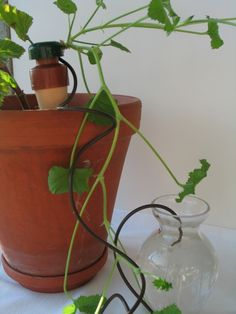 Plantevanner 3 stk