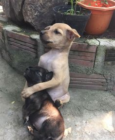 Favorite Images of Rescued Vietnamese Puppies