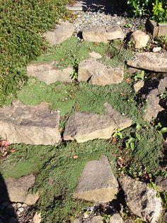 Outside steps