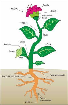 """""""PLANTAS"""" es un libro de la colección Abre los Ojos de la Editorial Pearson Alhambra. PARTES DE UNA PLANTA para completar. NUTRICIÓN DE LAS PLANTAS: Respiración y fotosíntesis. Clorofila. PARTES DE UNA FLOR para completar. REPRODUCCIÓN EN LAS PLANTAS gif animado.ETAPAS DE LA GERMINACIÓN DE UNA SEMILLA para colorear. ENLACES de Juegos didácticos para aprender sobre LAS PLANTAS."""