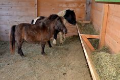 Click this image to show the full-size version. Mini Horse Barn, Miniature Horse Barn, Horse Hay, Miniature Donkey, Hay Feeder For Horses, Horse Feeder, Horse Stalls, Horse Barns, Horses And Dogs