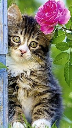 Baby Animals Pictures, Animals For Kids, Animals And Pets, Cute Animals, Kittens And Puppies, Cats And Kittens, Kittens Cutest, Cute Cats, Cute Baby Pigs