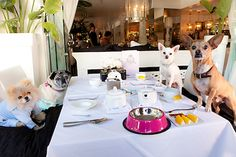 The real housedogs of Beverly Hills