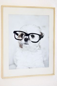#shihtzu #puppy
