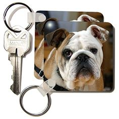 kc_17655_1 Taiche Photography - Dog American Bulldog - Key Chains - set of 2 Key Chains 3dRose http://www.amazon.com/dp/B004YMNIK4/ref=cm_sw_r_pi_dp_BhAhwb1HYVV69
