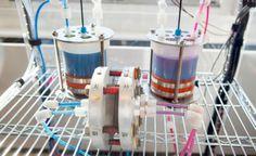 Bateria orgânica armazena energia gerada por sol e vento