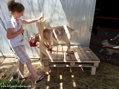 Goat stand from a pallet.