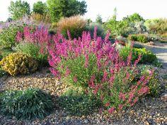 "Sept 8 via http://prairiebreak.blogspot.com/2015/03/kendrick-lake.html ""Agastache 'Ava'"" (Rabbitbrush or shadscale? Sundancer daisy?)"