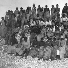 Oyster Shuckers on the Shore After the Civil War, many African Americans found work in the Chesapeake seafood industries. Packing houses in small communities such as Crisfield, on the lower Eastern Shore of Maryland, primarily employed African American women as oyster shuckers. In this 1891 image, the workers are atop the detritus of their handiwork—a pile of oyster shells.