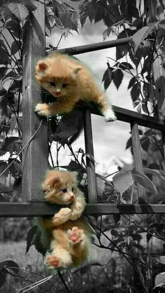 Color Splash, Splash Photography, Puppy Pictures, Color Themes, Funny Cats, Fox, Kitty, Puppies, Black And White
