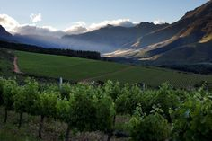 #NeilEllis Vineyards South Africa
