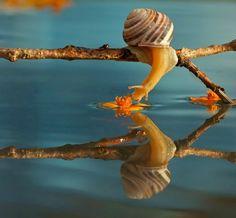 Vyacheslav Mischenko snail photographs - Imgur