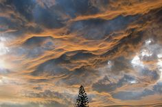 """nubbsgalore: """" known informally as asperatus clouds, this atmospheric phenomenon gets its name from the latin aspero, which roman poets used to describe the sea as it was roughened by the cold north. Undulatus Asperatus, Clouds Pattern, Nature Plants, Sky And Clouds, Cloud 9, Beautiful World, Beautiful Images, Mother Nature, Illusions"""