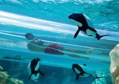 Veja os 12 melhores parques aquáticos do mundo