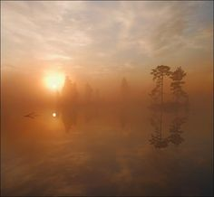 Early morning square picture with foggy sun and pines at island  By: Lizard King