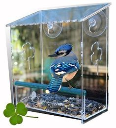 Birdhouse Is Clear, Window Mounted, See Through, Squirrel Resistant, Easy  To Install, Drainage Holes, Strong Suction Cups U0026 Beautiful Packaging ...