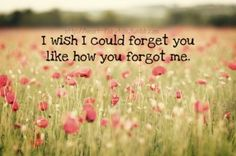 I wish I could forget you like how you forgot me. Like i don't even matter anymore