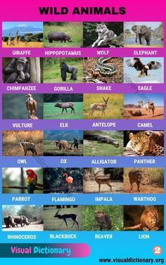 Animals Beginning With N, Animals Starting With A, English Study, English Words, Learn English, English Lessons, English Grammar, English Language, Alpacas