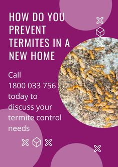 Looking for all new residences have some type of termite protection during construction. The method of termite protection must be a one that has been approved by the Impressive Pest Control of consumer services. If you want termite treatment for your new home, you may follow our tips to remove it. #pestcontrol #pestcontrolservice #termitecontrol #pestmanagement #ants #termite #exterminator #Werribee Termite Exterminator, Types Of Termites, Termite Control, Pest Management, Pest Control Services, Ants, Brisbane, New Homes