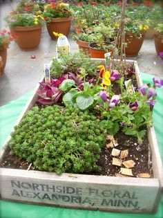 Fairy Gardening in an old wood crate.