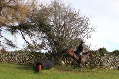 Twixhunting with the Grallagh Harriers. Video: https://www.facebook.com/CoopersHillEquine/videos/1212025888844579/ #loveirishhorses