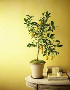 Wouldn't it be fun to have a citrus tree in your kitchen? This article from HeraldNet tells how to grow citrus indoors...
