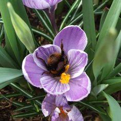 Make your garden bee-friendly in winter