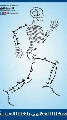 Skeletal bones in Arabic