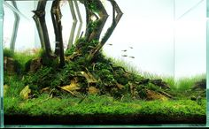 """A 108l ELOS-sponsored scape — that for some reason is called """"Lonely tree"""" —, has everything you ever wanted about complex minimalism in aquascaping. By Cecska (Tibor Szecsei)."""